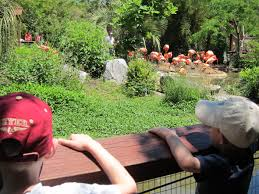 riverbanks botanical garden riverbanks zoo and garden kidding around in augusta