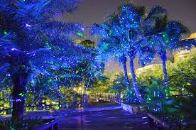 outdoor laser lights trees create spectacular outdoor laser