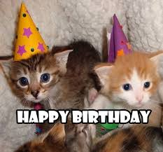 Cute Kitty Memes - happy birthday meme 2018 100 plus memes worth sending funny