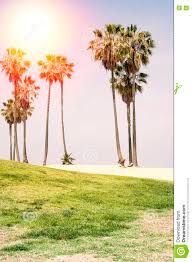 California Nature Activities images Sunny day on the beach of venice california background stock jpg