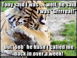 Frosted Flakes Meme - animal capshunz frosted flakes funny animal pictures with