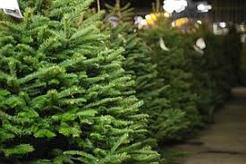 san diego wants you to recycle your christmas tree kpbs