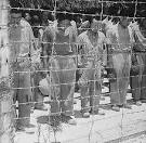 File:Japanese Prisoners of War at Guam - 15 August 1945.jpg ...
