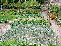 Family Garden - onion family growing problems and solutions