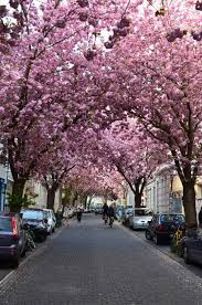 25 best cities in europe to enjoy cherry blossoms travellector