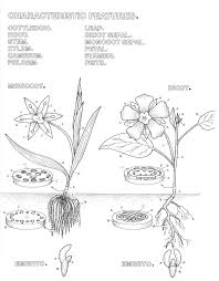 Leaf Dichotomous Key Worksheet Botany Coloring Pages Parts Of A Flower Page Anatomy Diagram