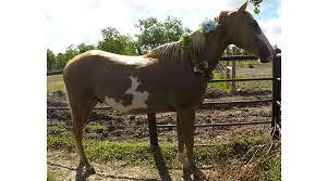 ashton adopted habitat for horses