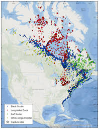 Map Of The United States Great Lakes by Atlantic And Great Lakes Sea Duck Migration Study Atlantic Coast