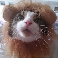 Halloween Costume Cat 30 Pet Cat Halloween Costumes 2017 Cute Ideas Cat Costumes
