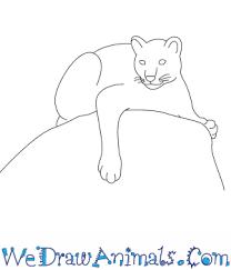 draw mountain lion