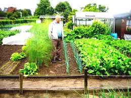 a tiny gardening delightful simple garden divine design taking