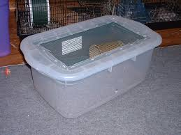 Cheap Rat Cage My Rat Care Guidelines