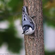 Ohio birds images Quot ohio birds quot jpg