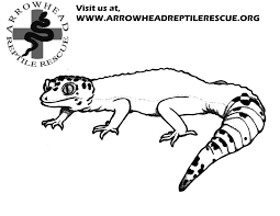 download leopard gecko coloring pages ziho coloring
