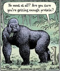 Protein Meme - protein vegan veganism know your meme