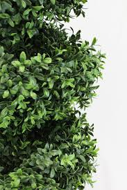 boxwood spiral topiary tree 4 foot 2 pack premium heavy duty
