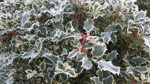 free images tree blossom winter fruit leaf flower frost