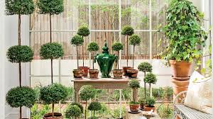Herb Topiaries Flourishing Topiary Care Tips Southern Living
