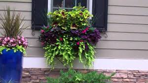 What To Plant In Window Flower Boxes - beautiful window boxes and hanging baskets 2011 1 5 min youtube