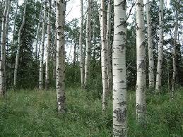 19 best deciduous trees images on deciduous trees