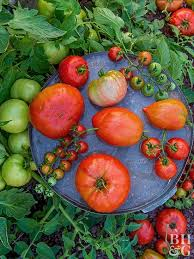 how to plant a vegetable garden u2013 home gardening guides