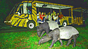 guided tours of singapore night safari singapore world u0027s first nocturnal zoo places on