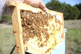 hive time products u2013 hive time a bee adventure for everyone