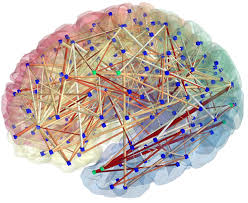 Brain Mapping Brain Mapping The Balanced Brain