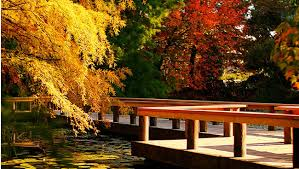 5 reasons to fall in vancouver