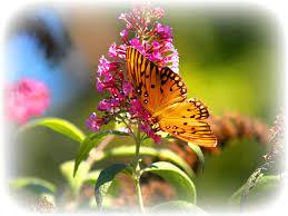 flowers spring nature butterflies flowers backyard pet flower