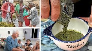 cuisiner les algues oser cuisiner les algues de l estran à l assiette