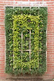 vertical gardens teach us to grow up especially when the stakes
