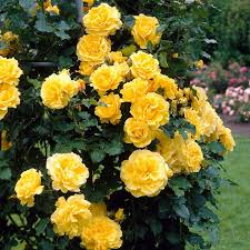 best 25 yellow flowers names ideas on pinterest yellow flowers