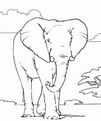african animals coloring pages printable coloring pages for