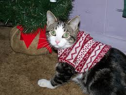 sweaters for cats 69 best fashion cats images on bamboo beanies and cat