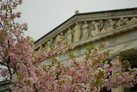 buffalo cherry blossom festival may may 5 6 2018 home