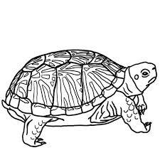 ninja turtle coloring pictures print pages size free