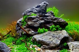 Aquascape Environmental How To Get Your Aquascape Right First Time U2014 Practical Fishkeeping