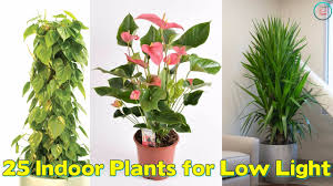 25 indoor plants for low light youtube