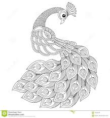 peacock antistress coloring page stock vector image