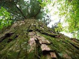 sterling tree program
