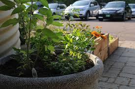 Urban Garden Supply - urban gardening urban gardens gardener u0027s supply