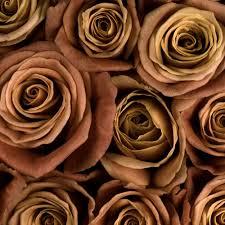color roses shop for wholesale flowers by color