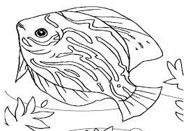 beautiful saltwater fish sea animals coloring download