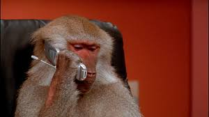 Baboon Meme - baboon videos and b roll footage getty images