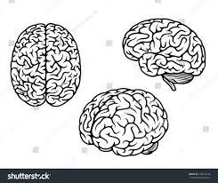 brain anatomy coloring book human brain three planes medical genetics stock vector 156673136
