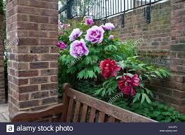 garden city flowers zandalus net