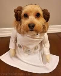 halloween costume cuteness yourdesignerdog
