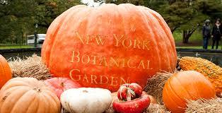New York Botanical Garden Pumpkin Carving by Manhattan Living Top 5 Leaf Peeping Spots In Nyc
