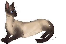 cat sketch zafi by rsenak on deviantart